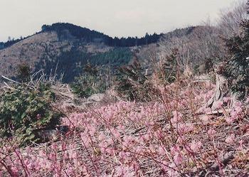 1992-4-shoujoubakama.jpg